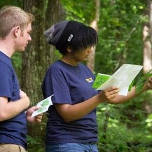 ecology study of leaves and trees in new river gorge
