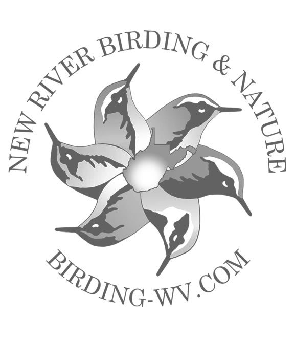 New River Gorge Birding Festival