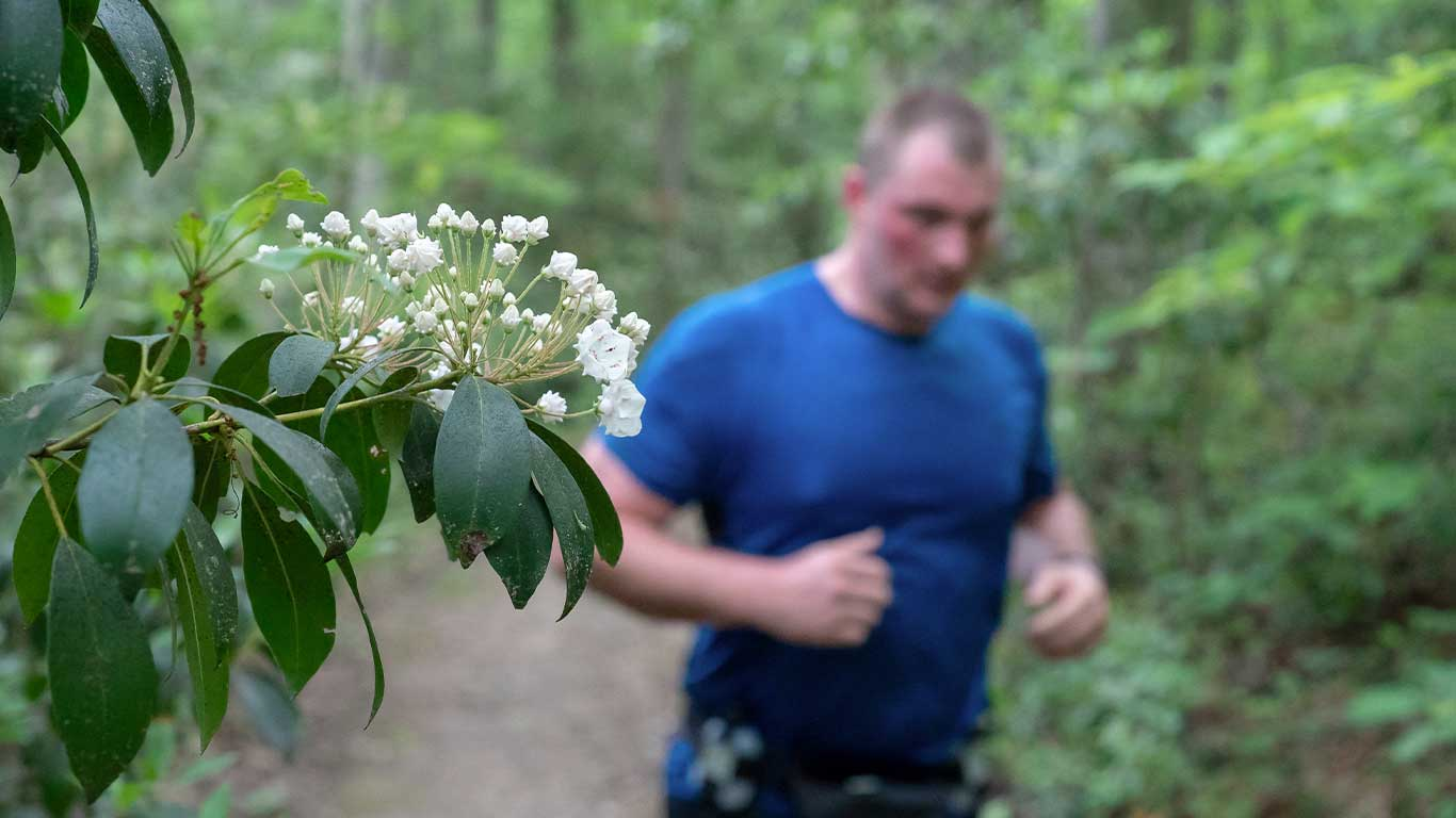 Photo of flower with trial runner in the background