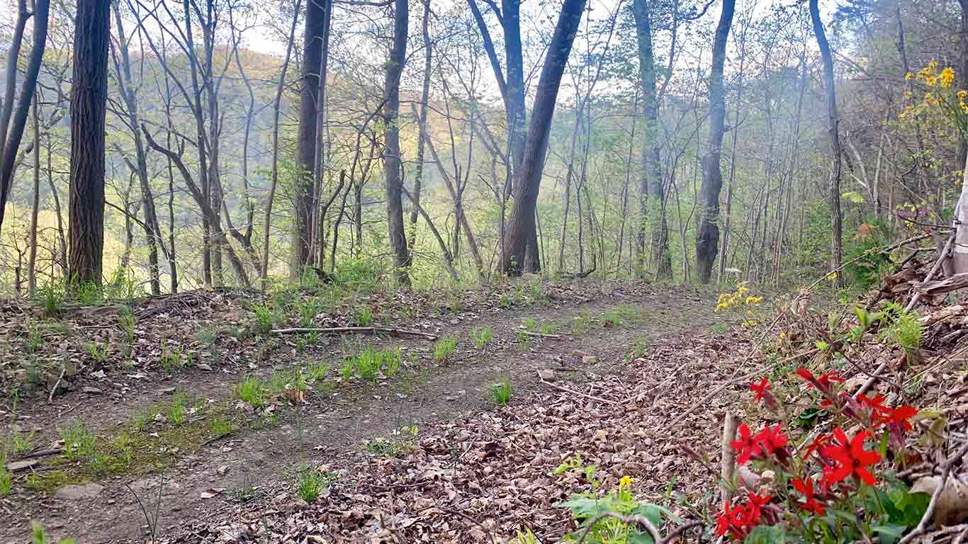 Trail for Wonderland Mountain Challenge Race